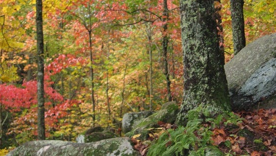 See fall colors at Paris Mountain State Park this weekend.