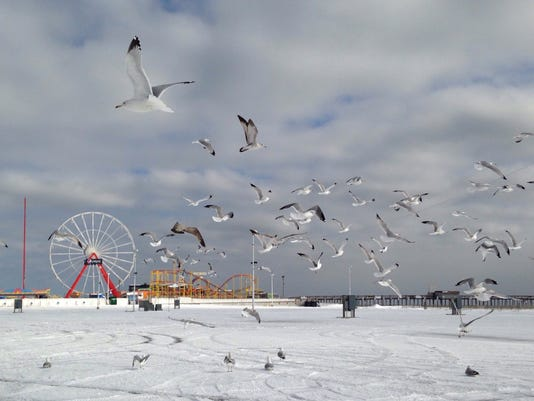 ocean city snowy inlet gulls