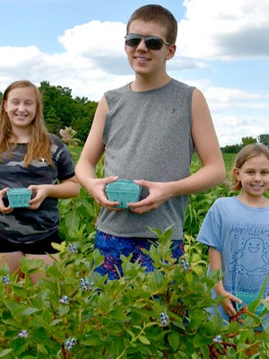 Experiencing a Corey Lake Orchard blueberry U-Pick was all that my granddaughters, Elizabeth and Sophia, and their close friend Demitri Poulos needed to learn even more about the fabulous flavor and health-boosting benefits that can be found in a precious blueberry.