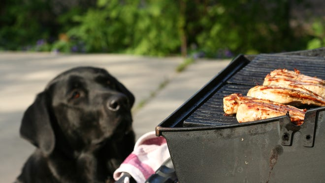 Animals in the CVAS shelter will benefit from the July 15 barbecue.