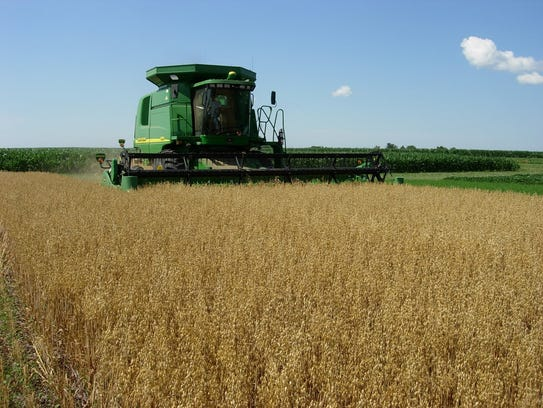 Oats are being harvested at an Iowa State University