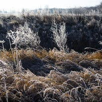 Frost forms on this roadside vegetation in St. Johns Sunday, November 29, 2015.