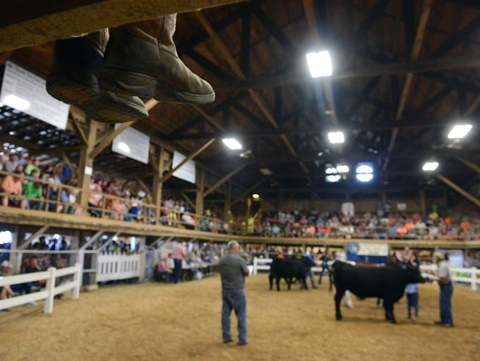 Participants show off their steer during the Junior