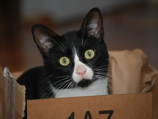 Jefferson the cat. He loves boxes.
