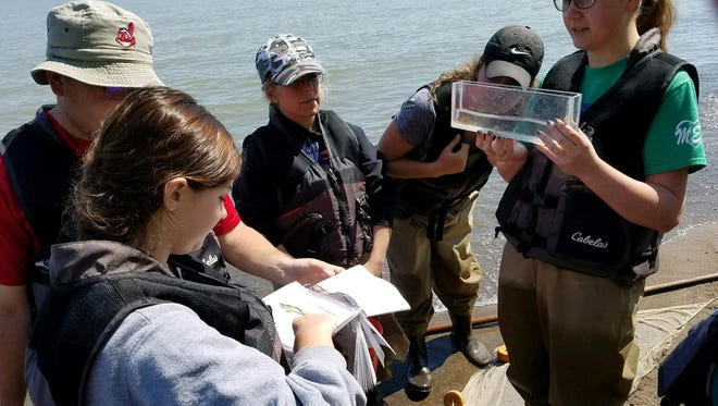 Conducting research at Old Woman Creek Estuarine Research Reserve in Huron provided a hand-on biology lesson for Shelby High School students.