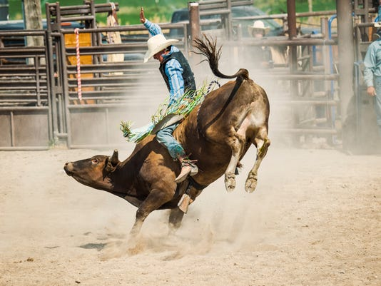 Bull Rider Going For That Golden 8 Second Ride