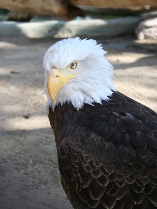 STG0530 dvt green column eagle.jpg