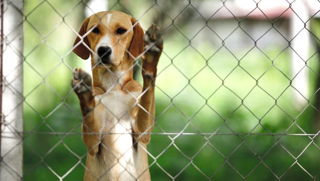 How you surrender your pet to Louisville's animal services is about to change