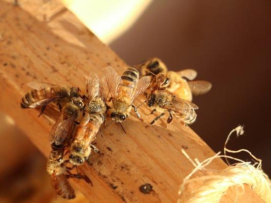 AP EXCHANGE COLLECTING BEES A ADV USA NE