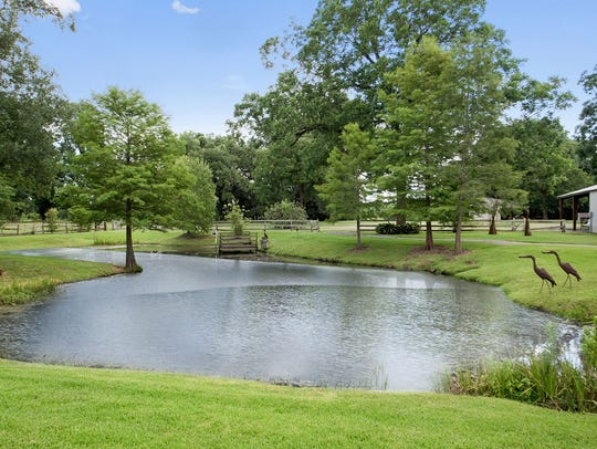 There are fruit trees and ponds on the property for