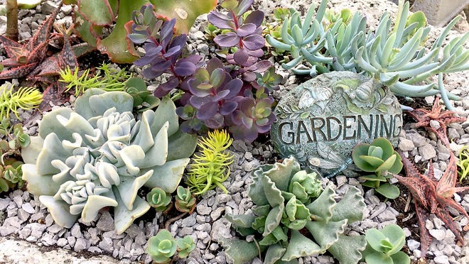 Succulents are low-maintenance plants that are an excellent choice for use in containers.