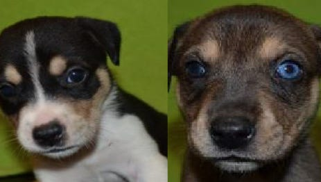 Serena and Tulay were recovered and returned to the Greenville Humane Society.