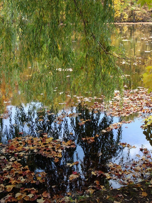 636334823112244724-5-Willow-Reflections-1-photo-by-Mary-Wagner-.jpg