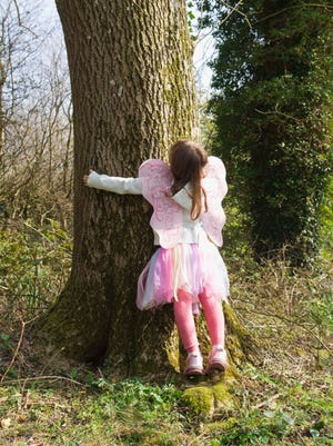 All will be welcome at the Brrnheim Big Tree hug.