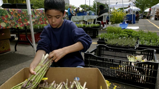 Oregon asparagus is now in season and available at the Salem Saturday Market as well as local grocery stores.