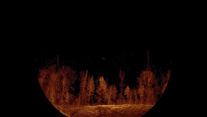 A sonar image shows an underwater forest in Smith Lake, near Cullman, Ala., where searchers are looking for a woman missing since a boating accident July 4.