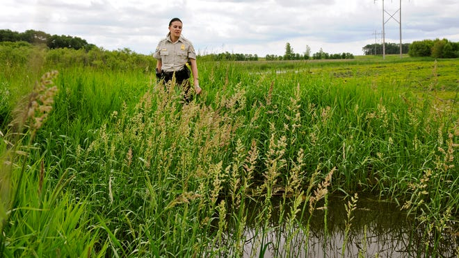 Ashley Look, federal wildlife officer with the U.S. Fish and Wildlife Service, stands Tuesday near an illegal drainage ditch that takes water from a protected wetland near Greenwald. The ditch that was dug in the 1980s was recently located by aerial photos and is being fixed.