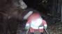 Bear vs Santa. Guess who won?