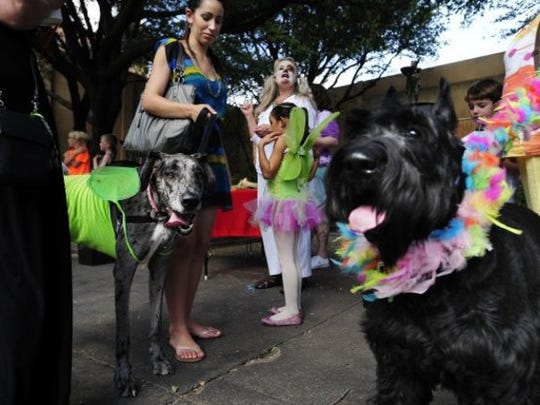 Dogs and their owners line up during the pet costume contest at DogWalk Thursday, August 8, 2013.