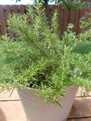 Bring herbs like rosemary, sage, parsley and chives in before the first frost.