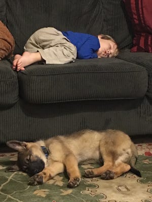 Rose, a 9-week-old German shepherd, sleeps on the floor beside 3-year-old Jack Crews. Rose was reunited with her family two days after a wreck just outside Starkville.