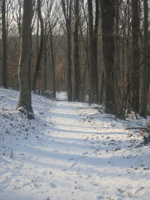 The Franklin Parker Trail as it descends to the red-blazed North Gate Road.