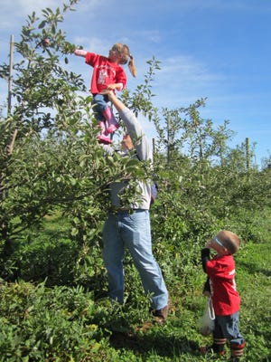 Families enjoyed the crisp late summer air and the juicy taste of farm-fresh apples during a recent visit to Alstede Farms.