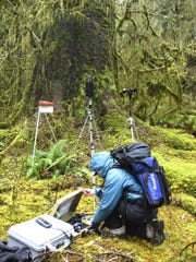 In this photo provided by the National Park Service, a National Park Service staffer sets up an acoustic recording station in the temperate old-growth Hoh rainforest of Olympic National Park, Wash. The call of the wild is getting harder to hear. Peaceful natural sounds, bird songs, rushing rivers and rustling grass, are being drowned out by human-made noise in nearly two-thirds of America's protected parks, forests and wilderness areas, a new study finds.