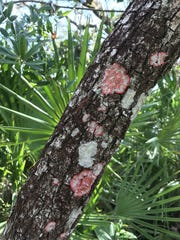 Scenes from hiking D.J. Wilcox Preserve in St. Lucie