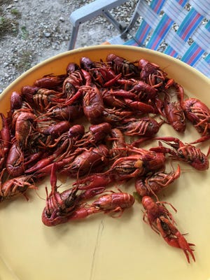 Is there a wine to pair with boiled crawfish? Yes — multiple!
