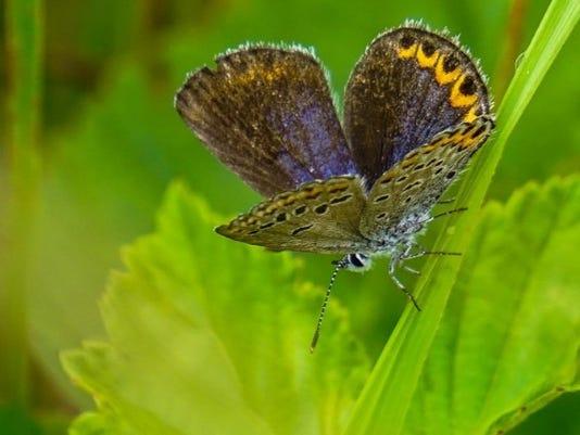 WSF 0915-butterfly.jpg