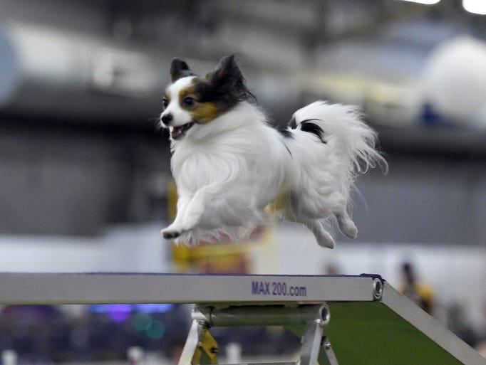 Cincinnati Kennel Club Dog Show