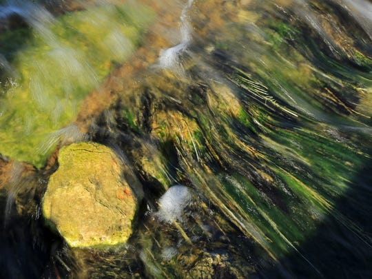 The waters of Rogers Spring bring color and life to