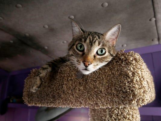 ACRO CATS 3