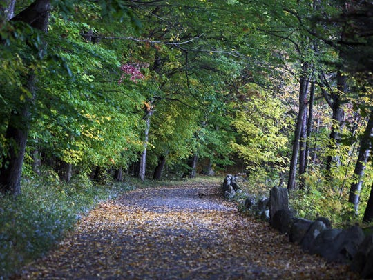 Fall foliage at Rockefeller State Park Preserve, photographed