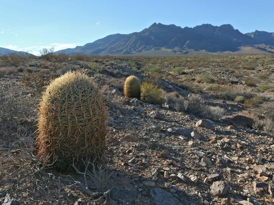 This area of the Mojave Desert near the Providence Mountains is in the watershed that flows to the aquifer that Cadiz Inc. plans to use for their water project.