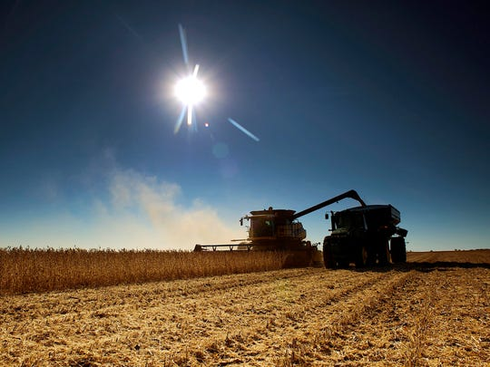 A combine harvests soybeans on a farm near Volin, South