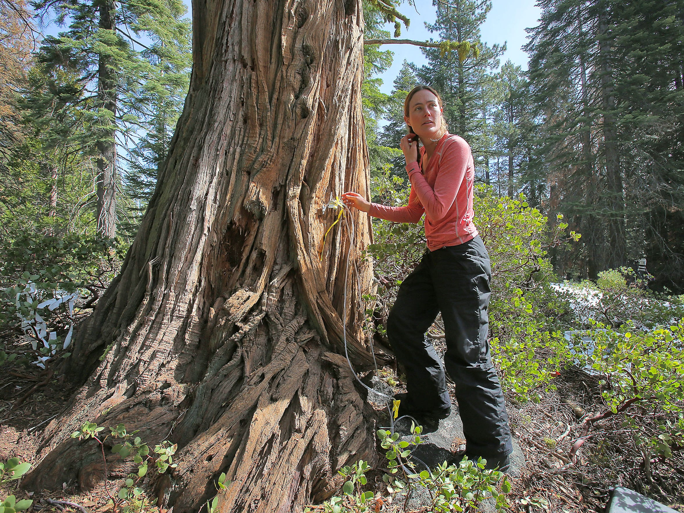 Melissa Thaw, a doctoral student at the University of California, Merced, is studying how water moves through the soil and where trees and shrubs are taking up water in the Sierra National Forest. She is focusing on the transition zone between rainfall and snow, which will be pushed higher into the mountains as the climate warms.