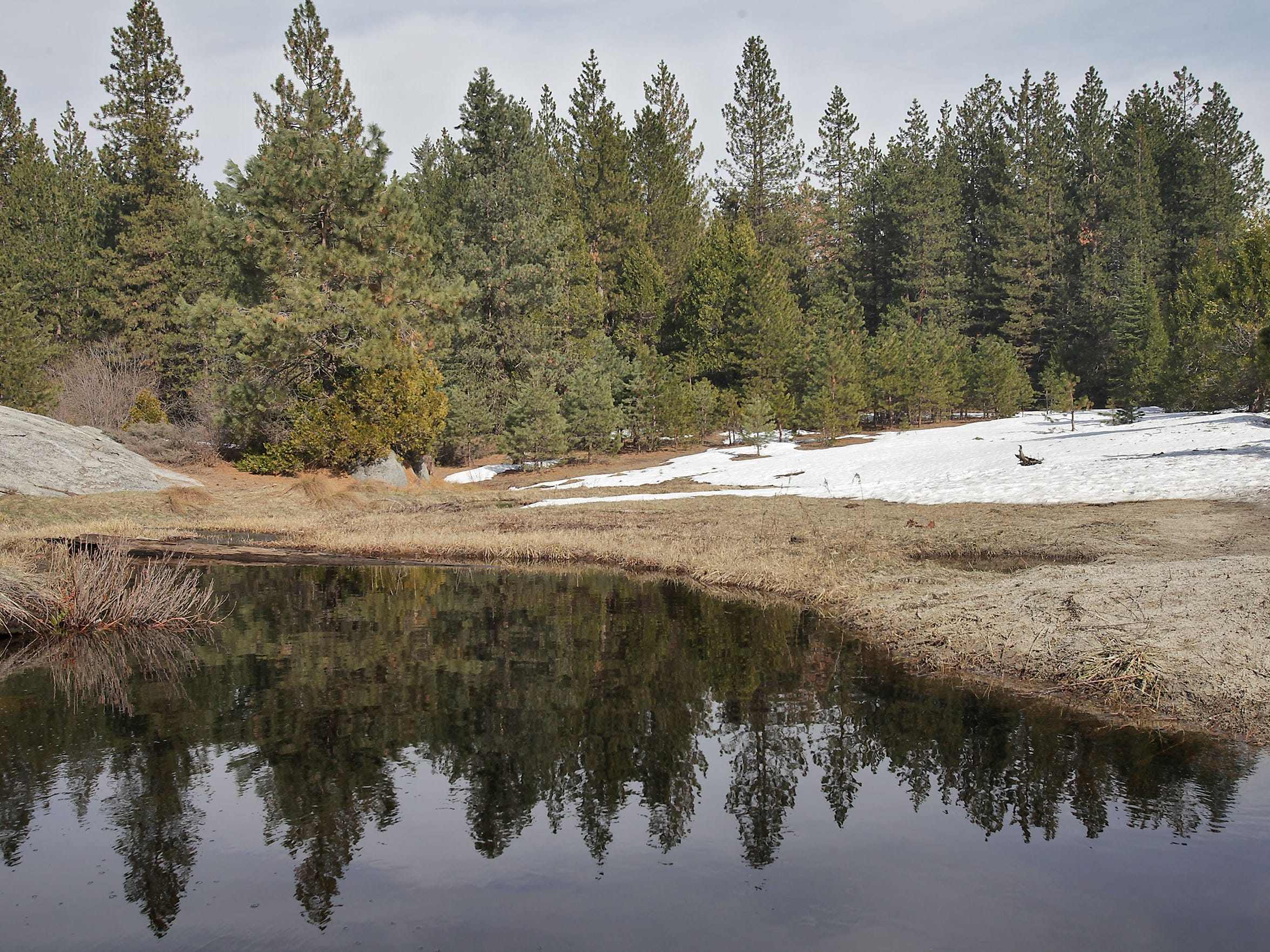 Snowmelt collects in a meadow in the Sierra National Forest.