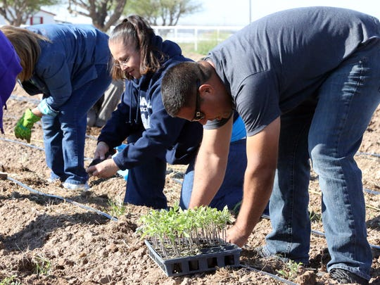 Jeramie Schmatjen, a military member and NMSU student, helps plant tomato plants at La Semilla Food Center farm in 2016 in Anthony, N.M.