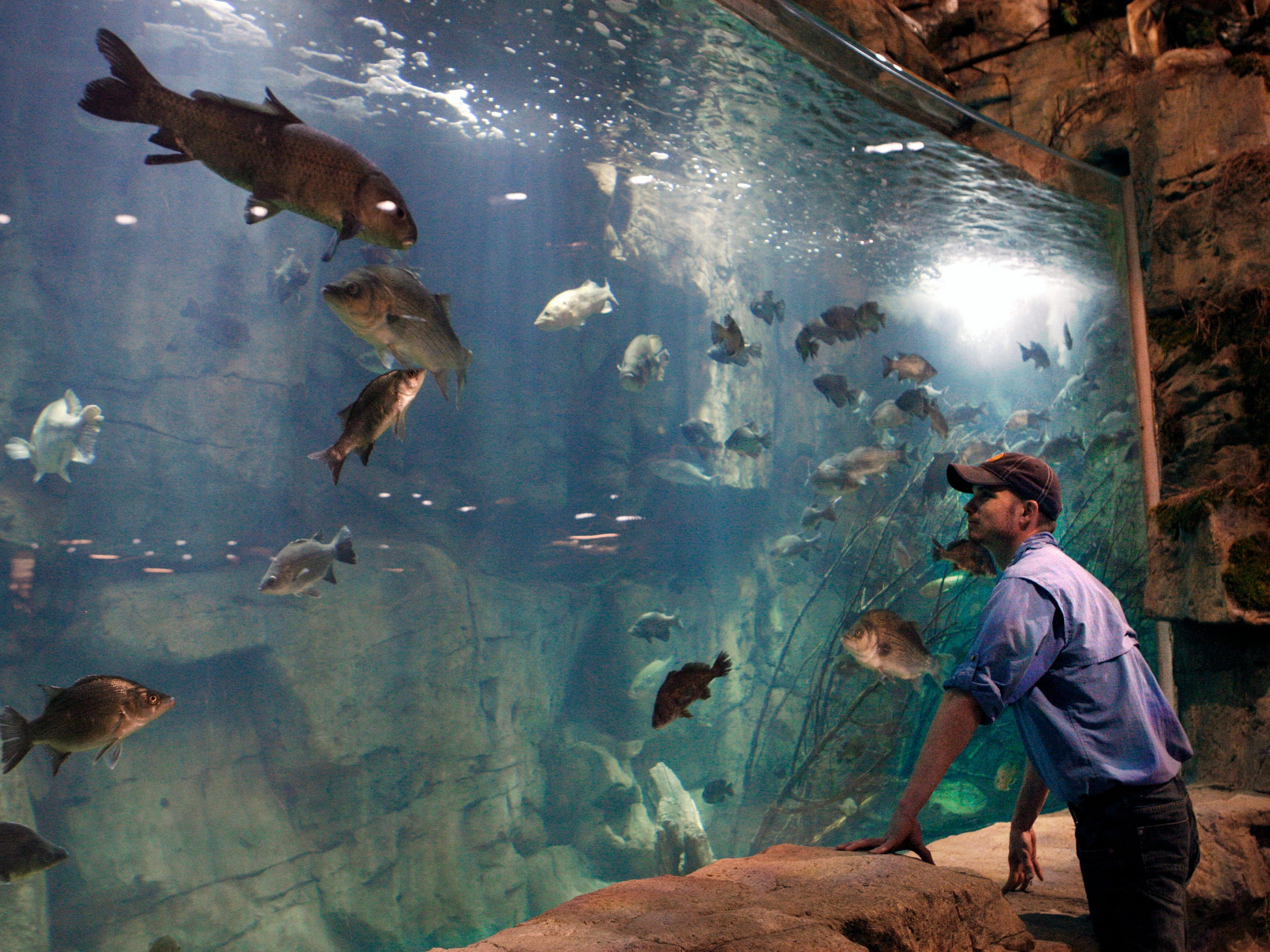 In this April 27, 2015 photo, Raulin Forst looks over an aquarium in the Bass Pro Shop store in Memphis, Tenn. Forst oversees the live exhibits in the store, which include 1,800 fish.