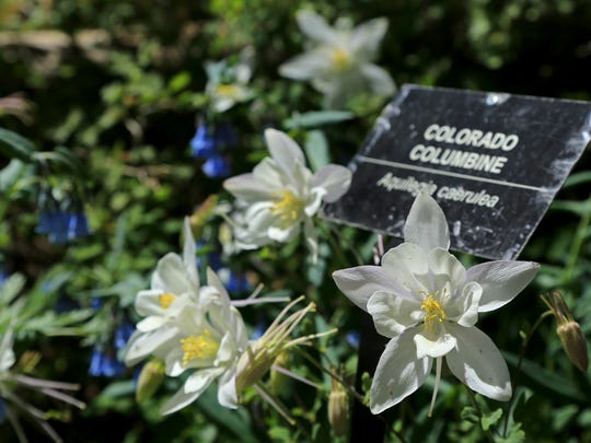 Signs at Cedar Breaks National Monument help visitors to learn the names of various wildflowers. The park's annual Wildflower Festival continues through July 17.