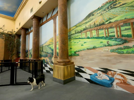 Murals fill the walls of a dog park and event room at Venus De Fido, a spa for dogs and humans, in Palm Desert Monday, July 11, 2016.