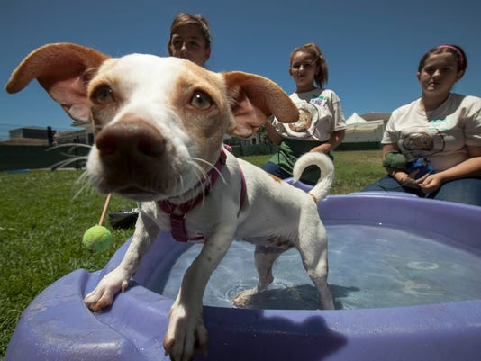 636066254155026782-SALBrd-07-01-2012-Statesman-1-A012--2012-06-30-IMG-Pets-Summer-in-the-S-2-1-KT1OHLS7-IMG-Pets-Summer-in-the-S-2-1-KT1OHLS7.jpg