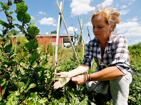 Horn Farm Center for Agricultural Education Executive Director Alyson Earl talks about malabar spinach amid the trellises used for vining plants in the incubator farm project section of the center in Hellam Township, Tuesday, Aug. 23, 2016. Dawn J. Sagert photo