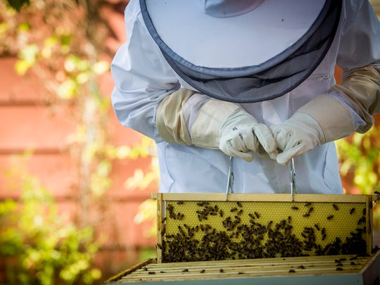 Clare Heinrich, 17, of Urbandale checks on her beehive in the backyard of her home on Tuesday, Sept. 20, 2016. Heinrich won a scholarship from the Iowa Honey Producer Association, which funded her to get the hives. The city of Urbandale says the hive has to be moved since it violates city code.