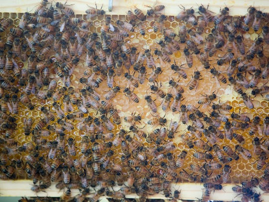 Des Moines Backyard Beekeepers Bee Removal Des Moines