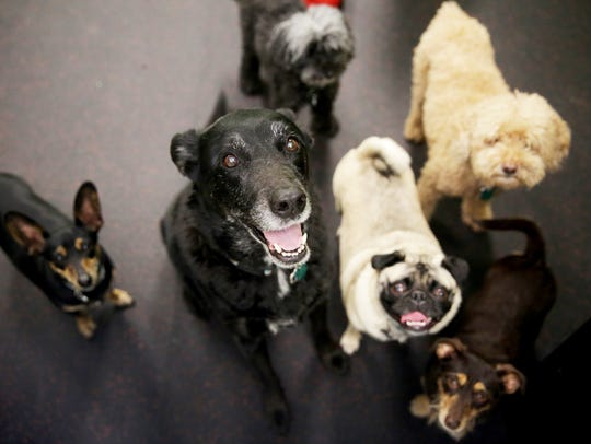 Dogs trained by dog trainer Janine Shlasinger in her