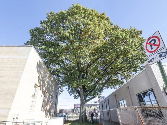 A black oak has survived sprouting between Broad Ripple businesses and the United States Postal Service building at 6255 Carrollton Ave. in Broad Ripple.