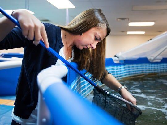 Valeska Minkowski, owner of Urban Seas Aquaculture, looks for shrimp in one of her tanks on Monday, December 5, 2016.